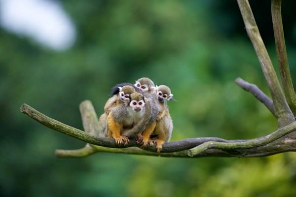 aapen zoo