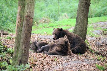 beren zoo