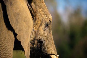 olifant zoo