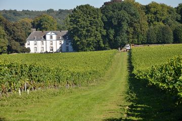 Wijnkasteel wijngaard