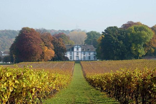 Wijnkasteel Genoels Elderen wijngaard