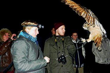 uilen workshop belgie in het donker