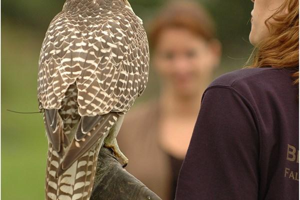 demonstratie roofvogel workshop