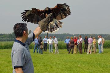 roofvogel workshop belgie