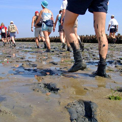 Wadlopen in Pieterburen