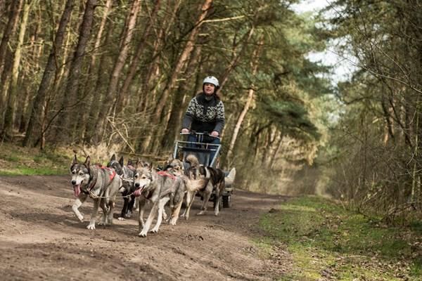 Sledetocht door het bos van Limburg