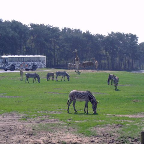 Op safari in Beekse Bergen