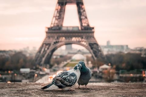 Jaarcadeau romantiek love birds