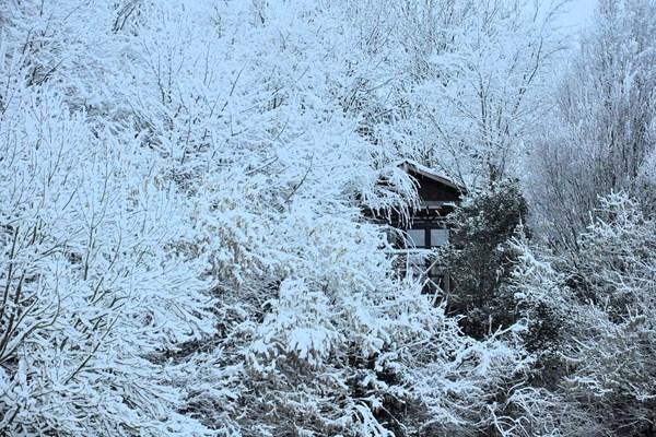 Boomhut in de sneeuw