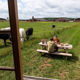 Slapen tussen de koeien