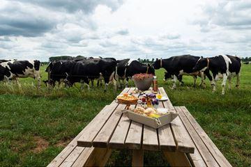 Ontbijt tussen de koeien